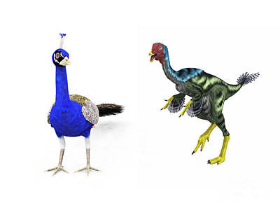 Pheasant Digital Art - A Caudipteryx Compared To A Modern by Walter Myers