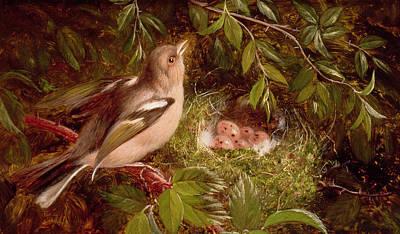 A Chaffinch At Its Nest Art Print