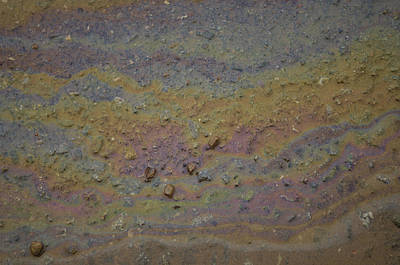 A Close-up Of A Parking Lot Oil Slick Art Print by Joel Sartore