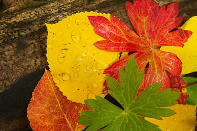 A Closeup Of Autumn Leaves Print by Ralph Lee Hopkins