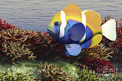 School Of Fish Digital Art - A Colorful Clownfish Swims Among by Corey Ford