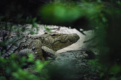 Gabon Photograph - A Crocodile Photographed Through Dense by Michael Nichols