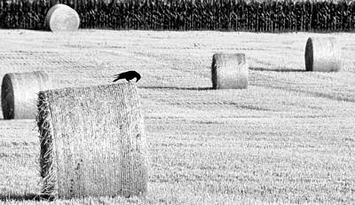 A Crow's Curiosity Art Print by Dana Walton