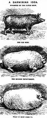 A Darwinian Idea, 1865 Art Print by Science Source