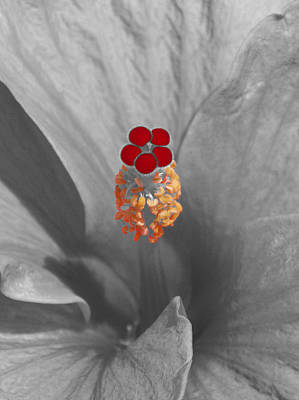 A Dash Of Color Hibiscus Art Print by James Granberry