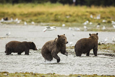 Prints Of Alaska Photograph - A Day At The Salmon Stream by Tim Grams