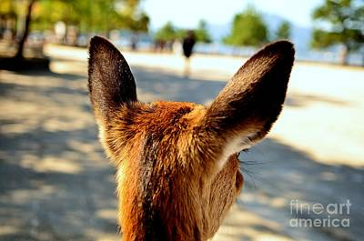Photograph - A Deer's Point Of View by Dean Harte