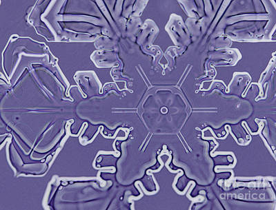Radial Symmetry Photograph - A Dendritic Snowflake by Ted Kinsman
