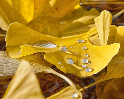 Gingko Wall Art - Photograph - A Dew Dew Dew by James Rowland