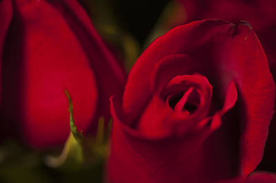 Photograph - Red Rose by Glenn Gordon