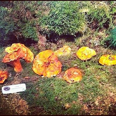 Woodland Wall Art - Photograph - A #display Of Lobster #mushroom by Victor Wong