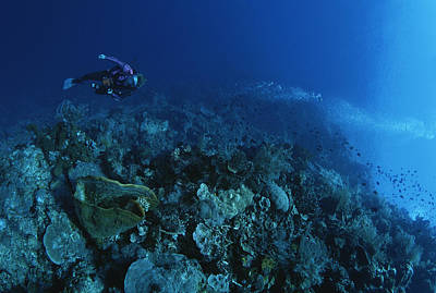 A Diver Descends A Coral Covered Wall Art Print by Tim Laman