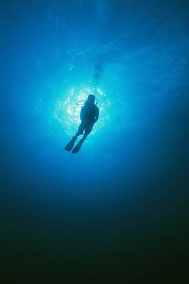 A Diver Descends Into The Caribbean Art Print by Heather Perry