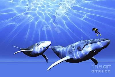 Humpback Whale Digital Art - A Diver Encounters Two Humpback Whales by Corey Ford