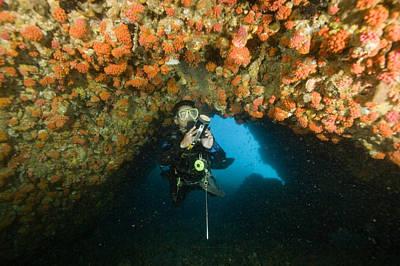 Malapascua Island Photograph - A Diver Explores A Cavern With Orange by Tim Laman