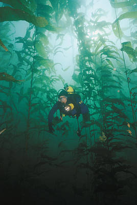 A Diver Exploring A Forest Of Giant Art Print by Wolcott Henry