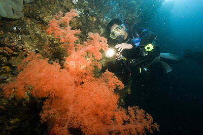 Malapascua Island Photograph - A Diver Looking At A Large Soft Coral by Tim Laman