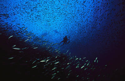 Photograph - A Diver Swimming Amid A Huge School by Heather Perry