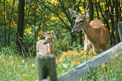 A Doe And Her Fawn 8317 Print by Michael Peychich