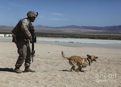Photograph - A Dog Handler Conducts Improvised by Stocktrek Images