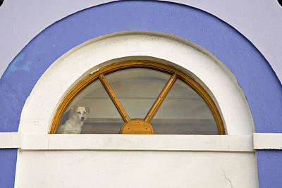 Framed Old Town Door Photograph - A Dog Stands In A Window Above A Door by Michael Melford
