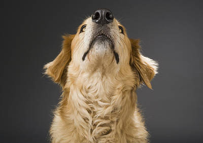 Pet Care Photograph - A Dog Waiting For Food by Gabor Geissler