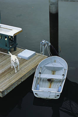 Docks Etc Photograph - A Dog Waits On A Dock Near A Small Row by Raymond Gehman