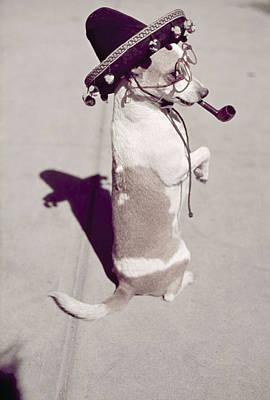 A Dog Walks Down A Street On Its Hind Art Print