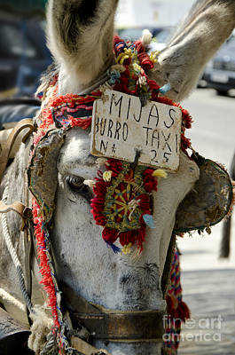 A Donkey Taxi In A Village Of Spain Art Print by Perry Van Munster