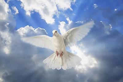 A Dove In The Sky Art Print