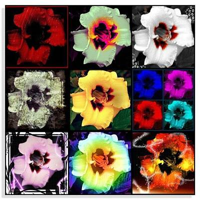 Edit Photograph - A Dozen Blooms by Mari Posa