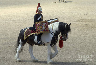Drum Horse Photograph - A Drum Horse Of The Household Cavalry by Andrew Chittock