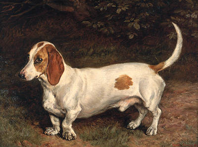 Dachshund Painting - A Favorite Dachshund by Frank Paton