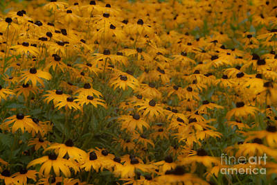 A Field Full Of Flowers Art Print by Michael Rucci