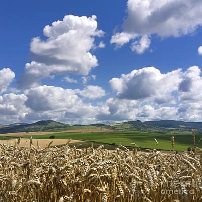 A Field Of Barley . Auvergne. France Art Print by Bernard Jaubert