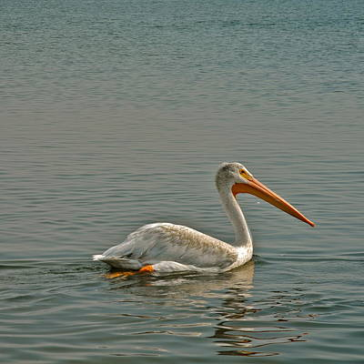 Photograph - A Fine Looking Pelican by Kirsten Giving