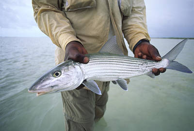 A Fisherman Holds Out A Bonefish Art Print by Michael Melford