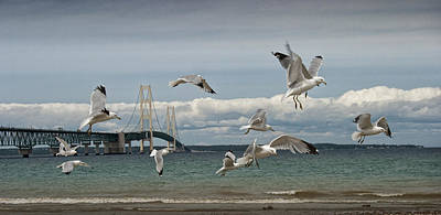 Photograph - A Flock Of Gulls By The Straits Of Mackinac by Randall Nyhof