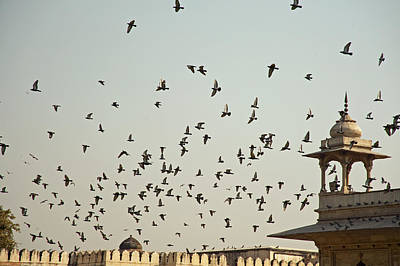 A Flock Of Pigeons Crowding One Of The Structures On Top Of The Red Fort Art Print by Ashish Agarwal