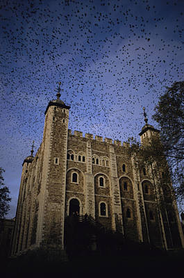 Installation Art Photograph - A Flock Of Starlings In Flight by Jonathan Blair