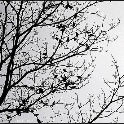 Finch Photograph - A Flocking Silhouette by Leon Traazil