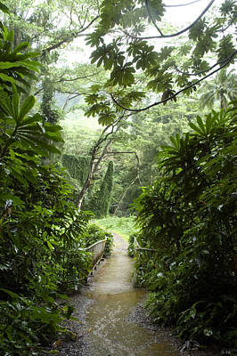 A Flooded Path At Manoa Falls Art Print by Stacy Gold