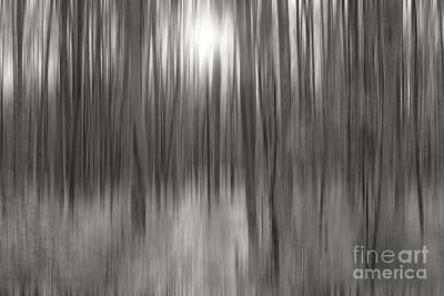 Photograph - A Forest Melody by Sharon Mau