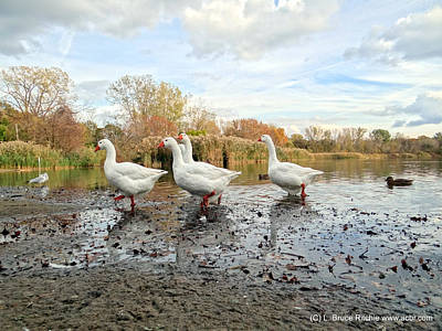 Mixed Media - A Gaggle Of Geese II by Bruce Ritchie