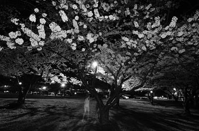 A Ghost In The Cherry Blossoms Art Print by Shirley Tinkham