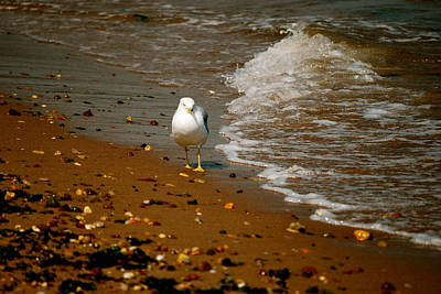 Photograph - A Gull Walks Alone by Michelle Cruz
