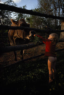 A Half-naked Toddler Feeds A Cow Grass Art Print