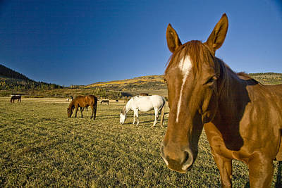 A Horse Stands In A Field On A Summer Art Print