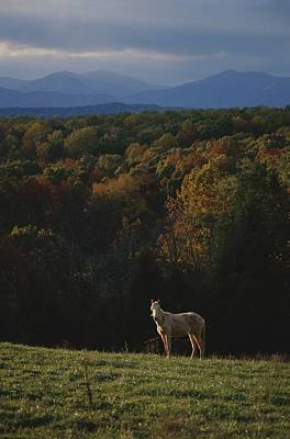 A Horse Stands On A Hill Overlooking Art Print by Sam Kittner