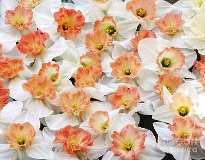 Photograph - A Host Of Pink Daffodils by Michele Penner